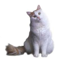 Окрасы кошек / Основные окрасы.