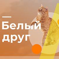 ZOO -корм для котов