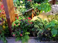 Проект организации садового участка