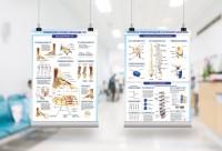 Плакаты медицинская тема (позвоночник, ступни, скелет) +2