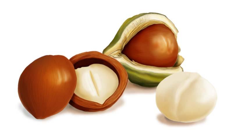Макадамия или австралийский орех