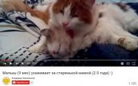 Котейки - youtube
