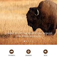 SouthWest Plains Bison
