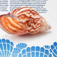 Буклет Arcadia - виллы в Болгарии
