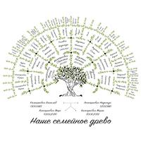 Семейное древо (отрисовка в векторе)