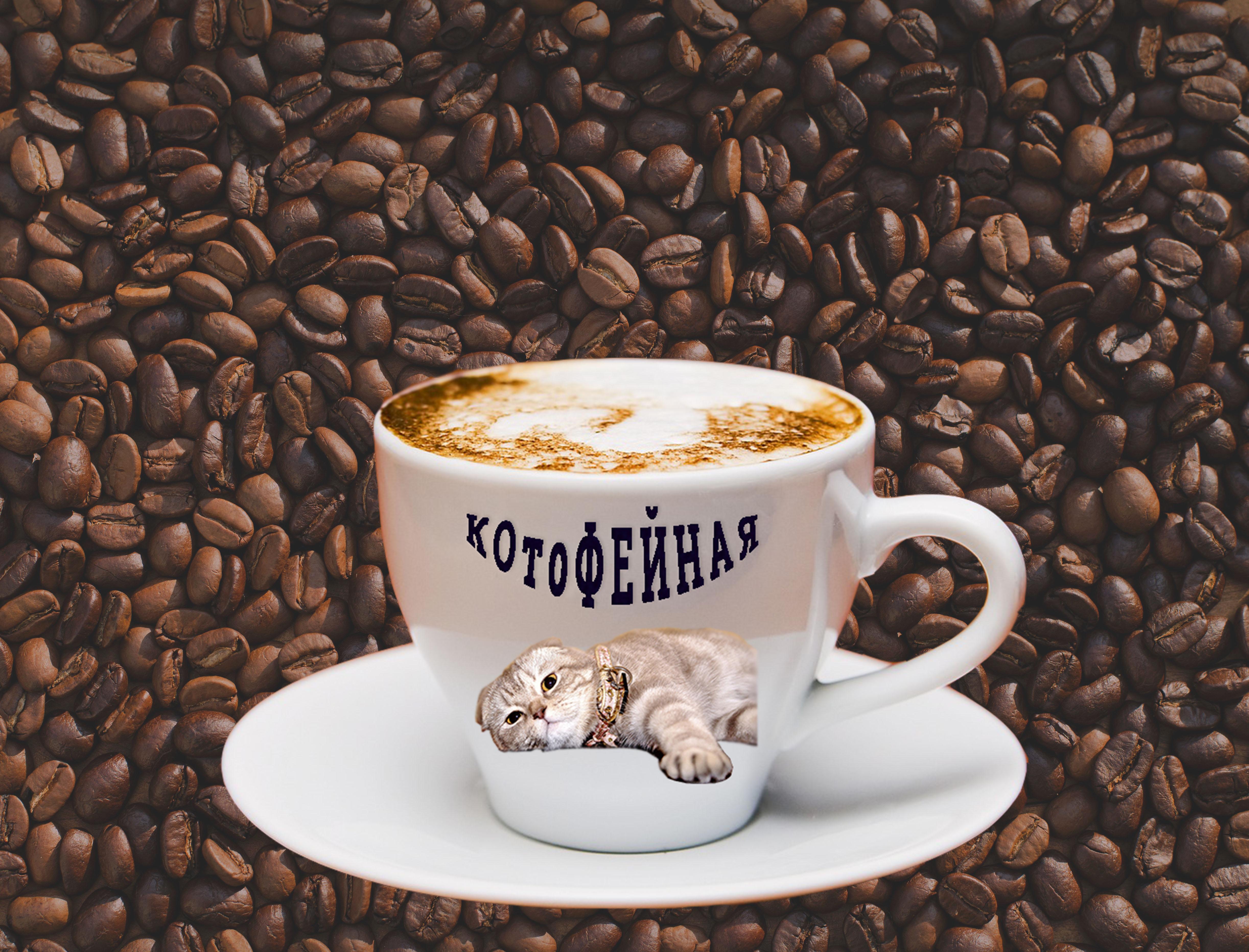 Название, цвета, логотип и дизайн оформления для сети кофеен фото f_6475b9aa5dc5c6f4.jpg