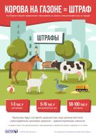 Инфографика Выпас сельхозживотных в городе