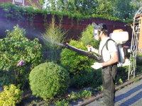 Лечение деревьев от короеда