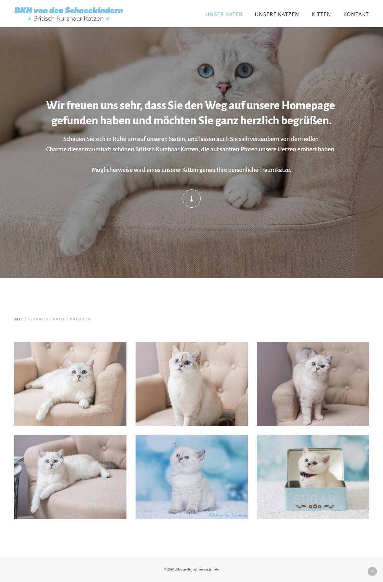 Сайт-портфолио для продажи породистых кошек (Германия)