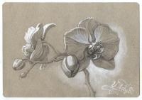 Орхидея 2