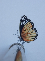 Настенная роспись. Бабочки.