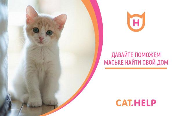логотип для сайта и группы вк - cat.help фото f_89959ddb30634548.jpg