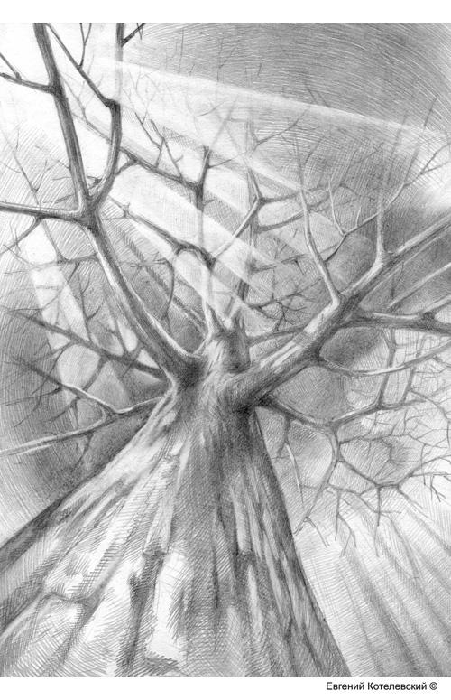 Дерево. Карандашный рисунок.