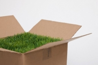 Декоративный травяной газон