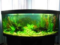 Аквазар. Установка аквариумов