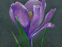 Рисунок открытки карандашом. Производство открыток