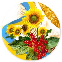Сайт визитка для Депутата Киевской рады