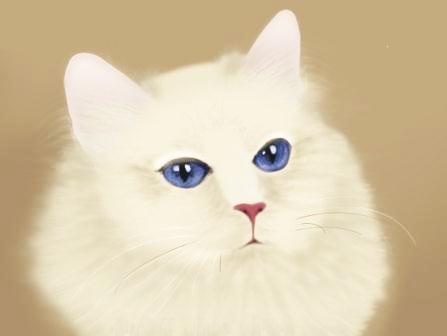 Кот (иллюстрация)