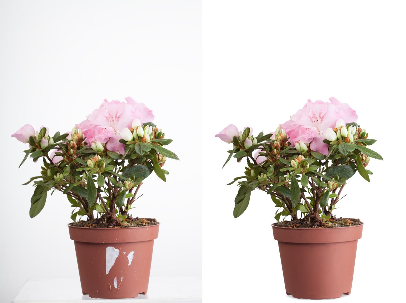 Ретушь/удаление фона (цветы)