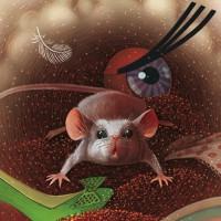 Впечатления мышки Машки