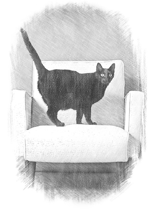 Логотип для сайта OBIVKA.RU фото f_4975c177eb64cb20.jpg