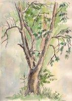 Иллюстрация Деревья