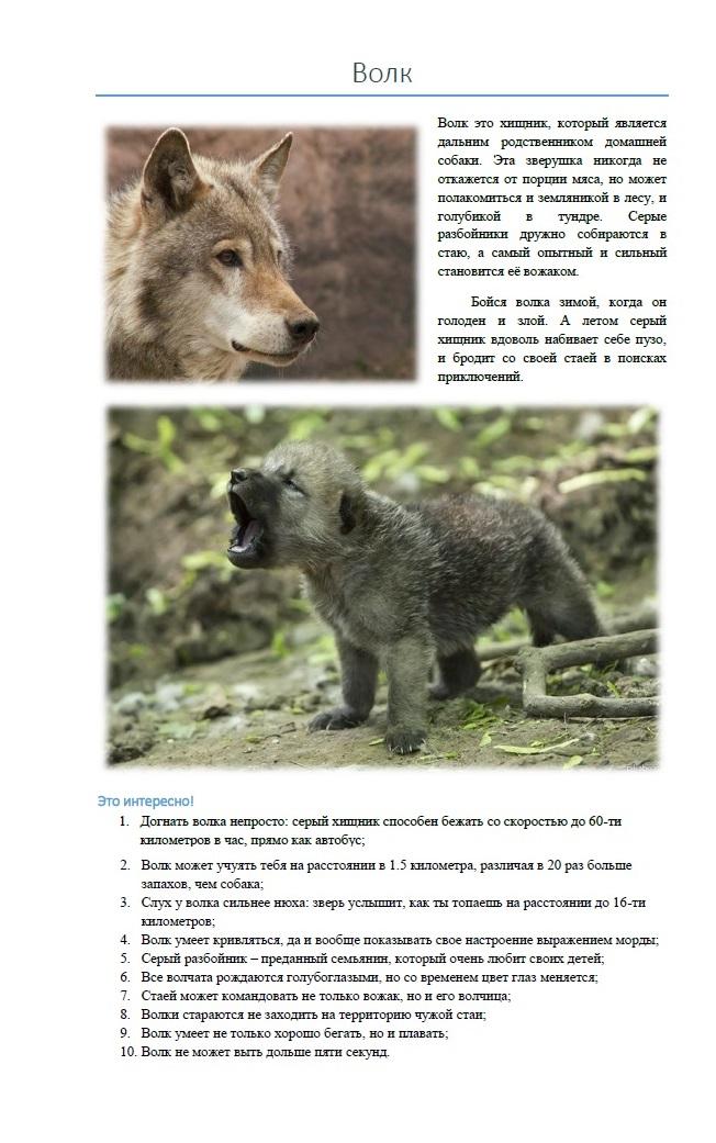 Описание волка. Для детской книжки