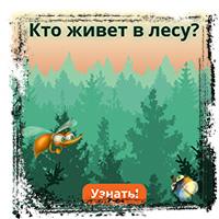 Piknik Кто живёт в лесу?