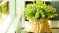 Люди, которые выращивают цветы