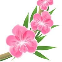 Бамбук рамка орхидея 100% вектор