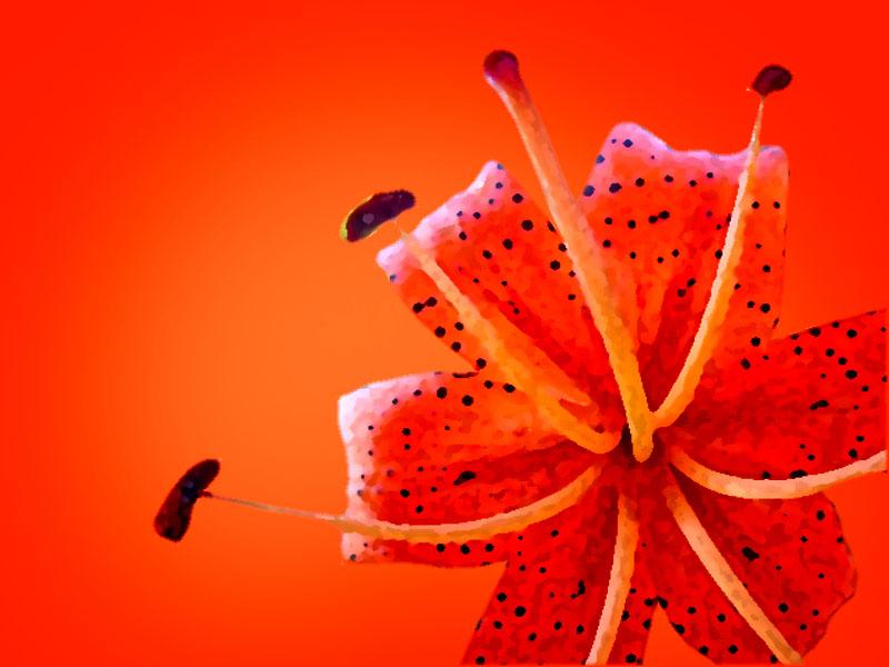 Фоны. Красная лилия