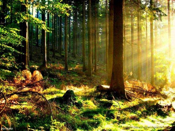 Опушка леса F_4b31d35671c37