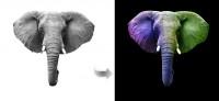 Слон. Обтравка и замена цвета