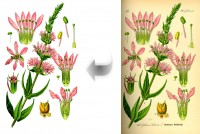 Обтравка растений 2