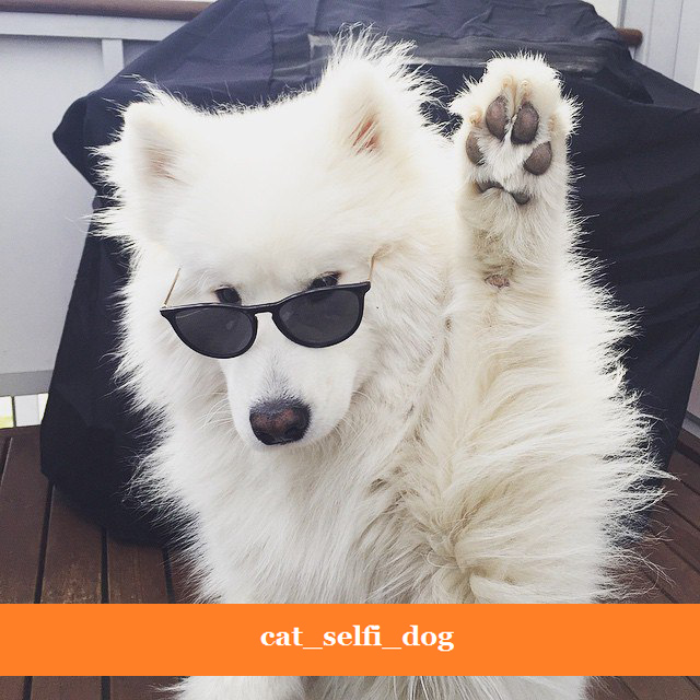 Сat_selfi_dog