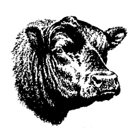 Лендинг. Экоферма бычков. Концепт.