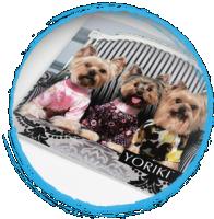 Каталог одежды для собак