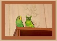 Фотомонтаж. Попугай
