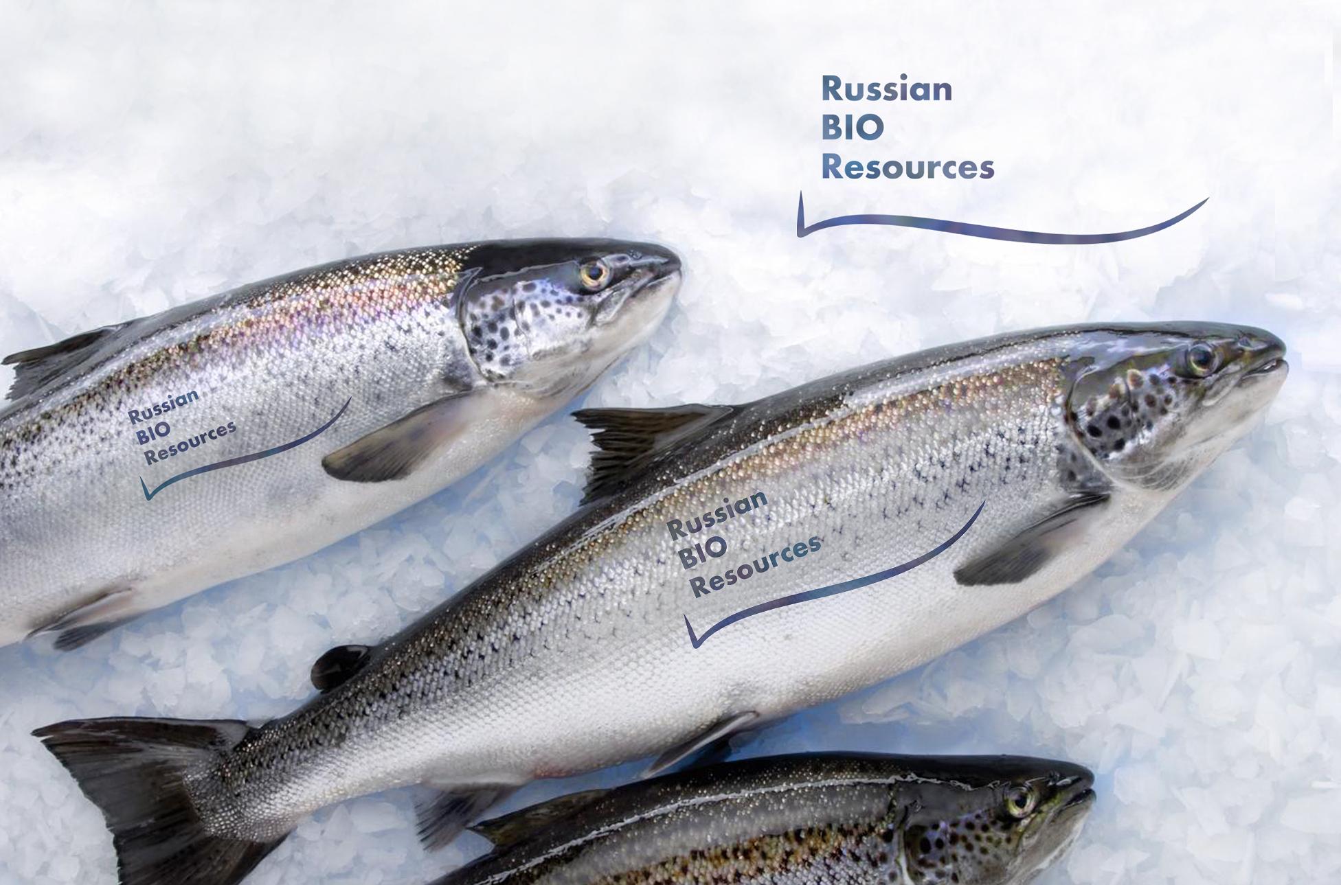 Разработка логотипа для компании «Русские Био Ресурсы» фото f_11658fccbfbc9494.jpg