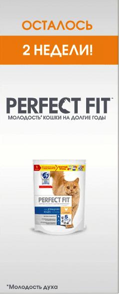 Реклама корма для кошек