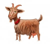Коза - иллюстрация для брынзы