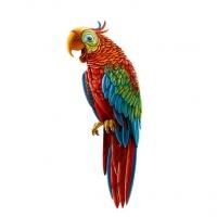Иллюстрация - папугай