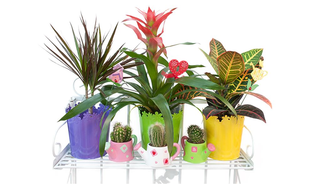 Комнатные-растения баннер