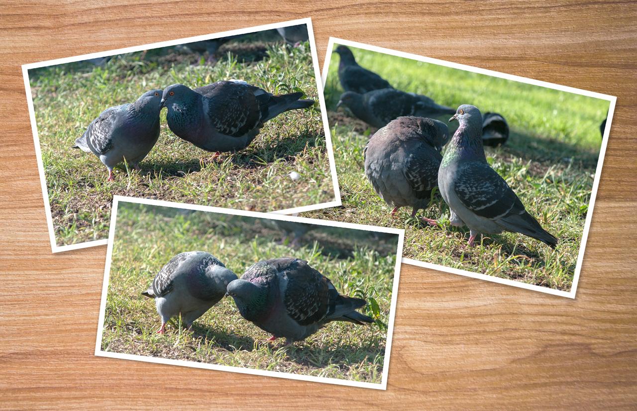 История любви у птиц