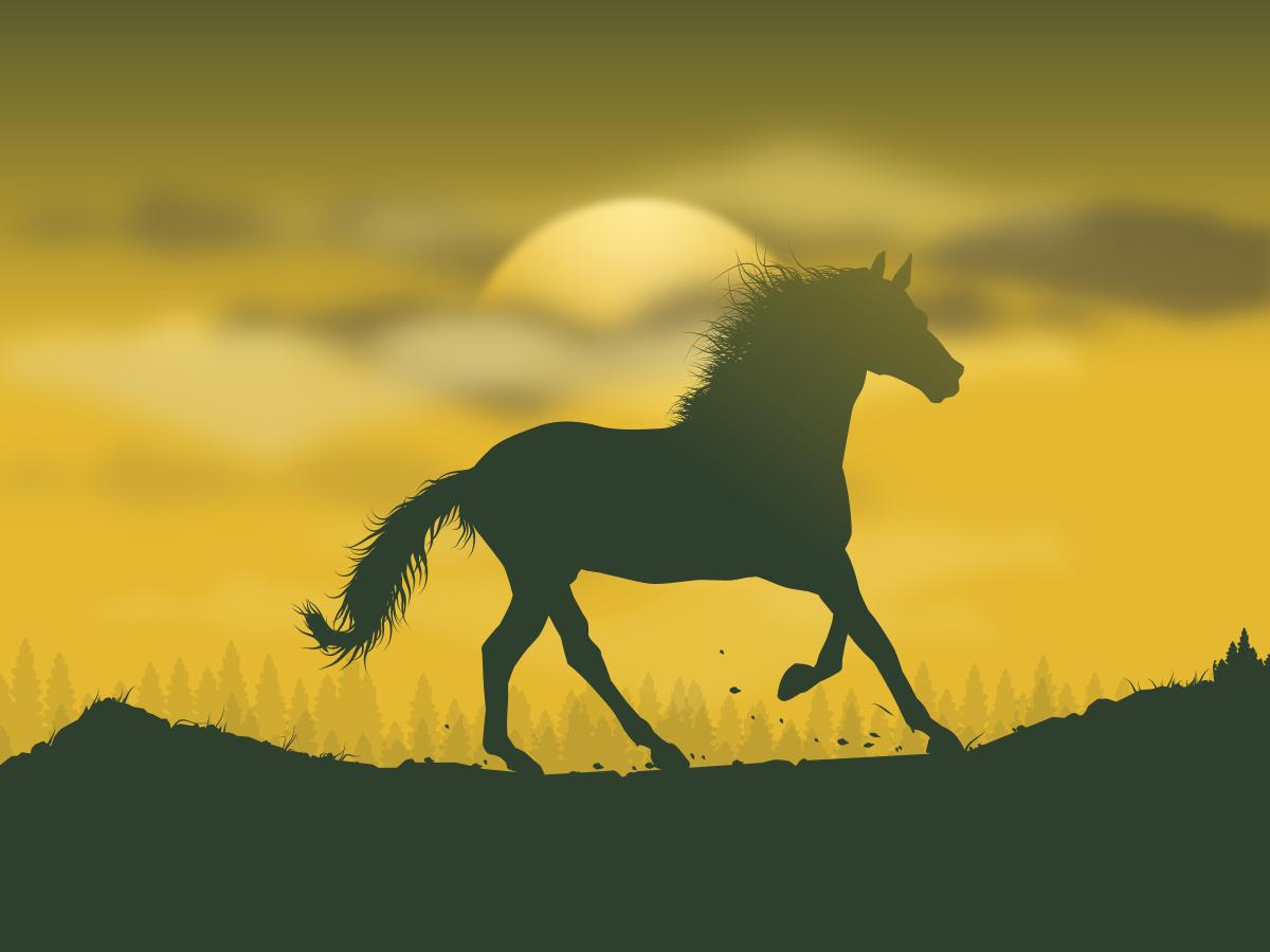 Sunrise of freedom illustration