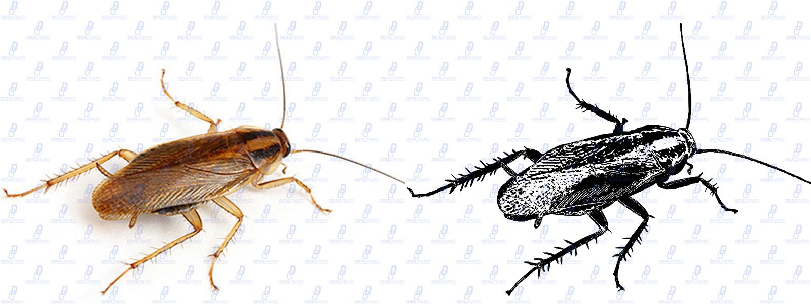 Стилизация фото таракана согласно задаче
