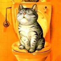Кошачий туалет_Лендинг