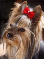 Бантики для собак_Лендинг