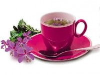 КП_Иван-чай