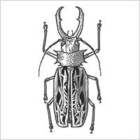 Бразильский жук